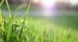 Mit der richtigen Rasensaat zum perfekten englischen Rasen