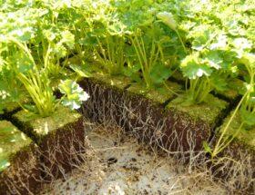 Pflanzen aus dem Growbox Komplettset